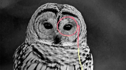 illustrasjon fra Krogh Optikk av en ugle